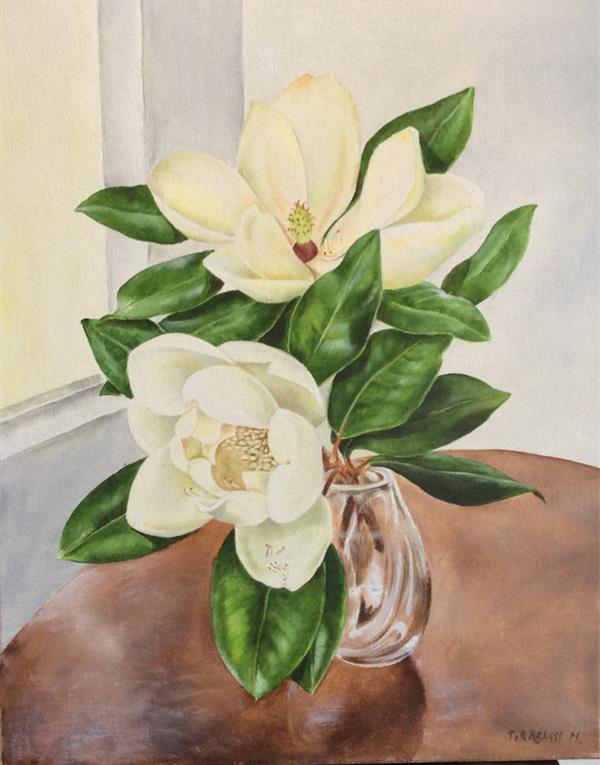 Magnolie in vaso